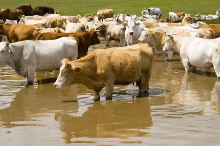 herd in the wild Stock Photo - 13170796