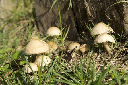 underbrush:  mushrooms