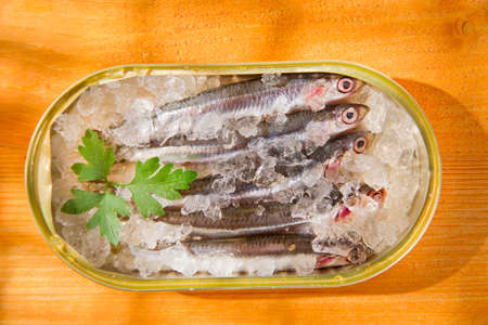fished: Presentation of fresh anchovies fished with ice  Stock Photo