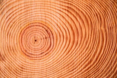 Details of the rings perpendicular to the trunk of a pine tree Stock Photo