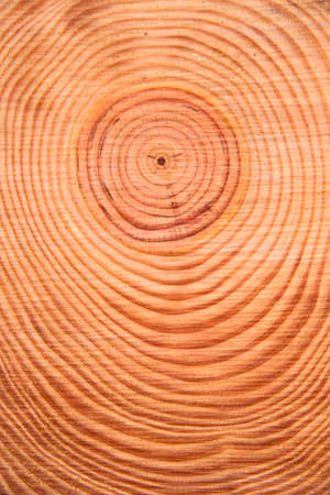 perpendicular: Details of the rings perpendicular to the trunk of a pine tree Stock Photo