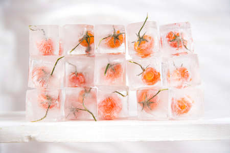 Presentation of ice cubes inside with grains of tomato Pachino Standard-Bild