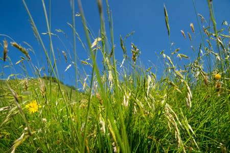 the view from below: View from below of bush grass field in summer Stock Photo