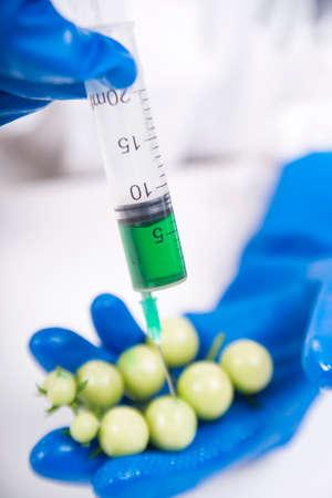 clonacion: Presentaci�n de la fase de laboratorio a la pr�ctica de los OMG