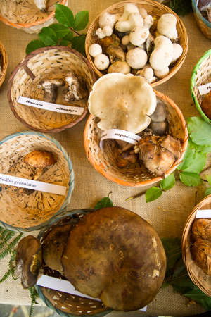 mycology: Exhibition of mixed mushrooms freshly picked in the woods