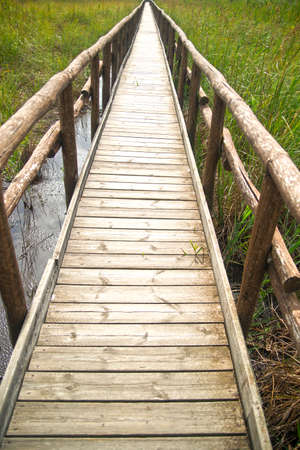 treaties: Treaties of wooden walks in the Regional Park of Lake Massaciuccoli Italy Stock Photo
