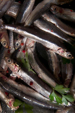 fished: Fresh anchovies just fished in the Mediterranean Sea Stock Photo
