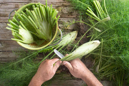 cleaned: Cleaned and fennel just picked from the garden