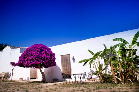 receptive: Particular architectural typical of the Masseria in Puglia zone Salento Italia