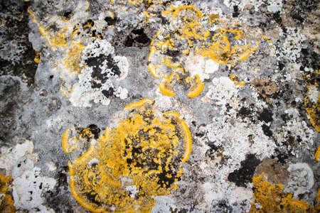 Photographic representation of the damaging effects of mold on a wall