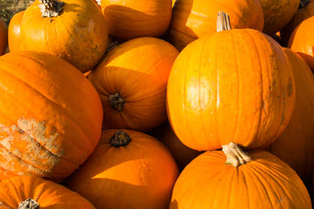Pumpkin in the open air Stock Photo - 13557810