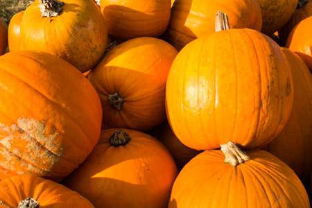 farbe: Pumpkin in the open air