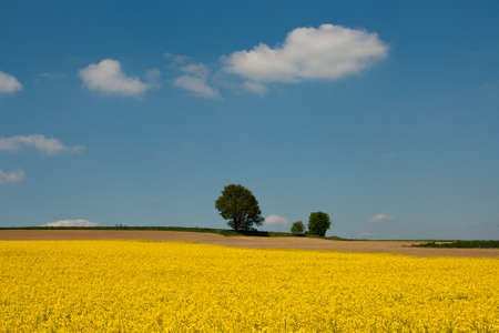 biodiesel plant: Rapeseed field in Germany Stock Photo