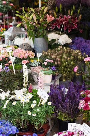 pflanzen: blumenmarkt  Stock Photo