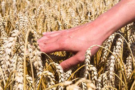 Cereals in hand