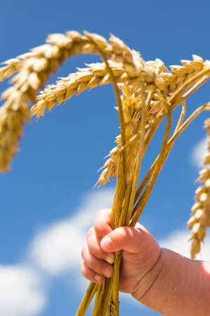 Cereals in hand under blue sky