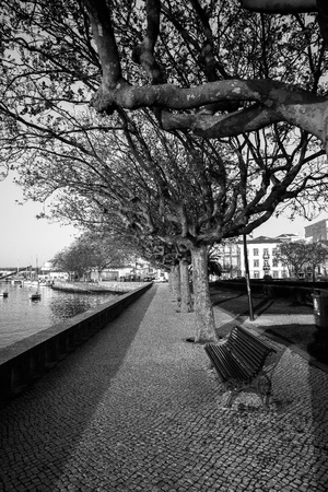Black & White picture of a park near the coast of Porto Stock Photo - 16231943