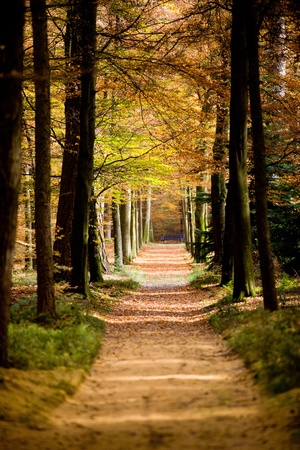 a path is in the autumn forest 免版税图像 - 16277207