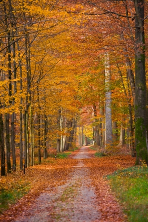 a path is in the autumn forest photo