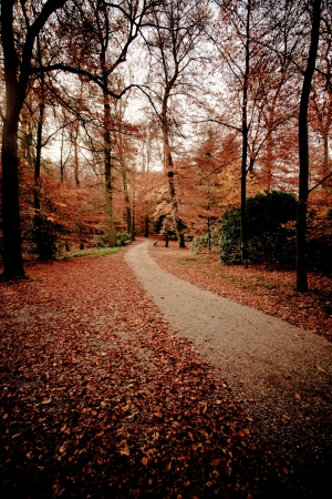 colourful images: a path is in the autumn forest