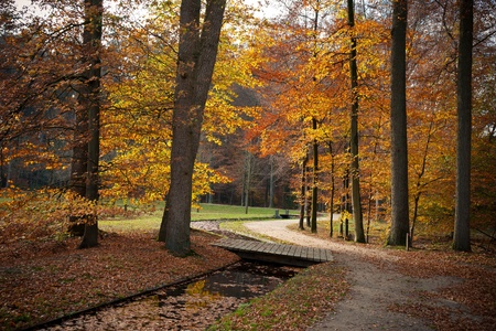 royalty free photo: a path is in the autumn forest