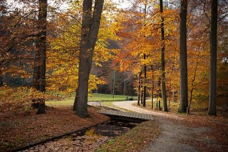 een pad is in de herfst bos Stockfoto