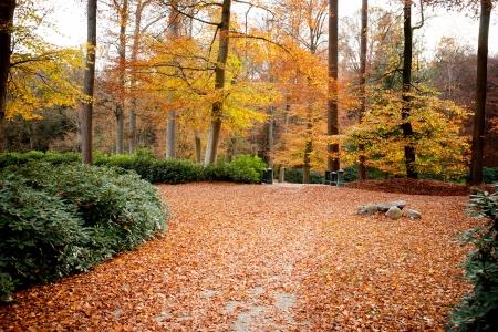 un chemin dans la forêt d'automne