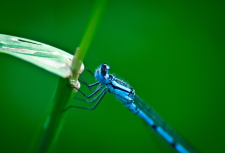 diffused: blue dragonfly on a reed on the waterfront