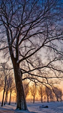 solstice: Winter Tree