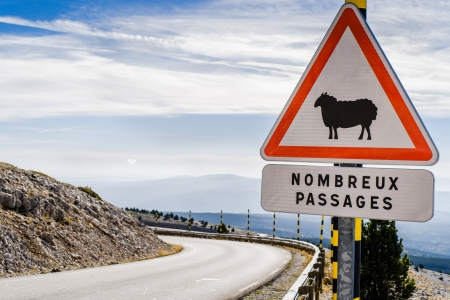Sheep Road Sign, France, Mountain, Mt  Ventoux photo