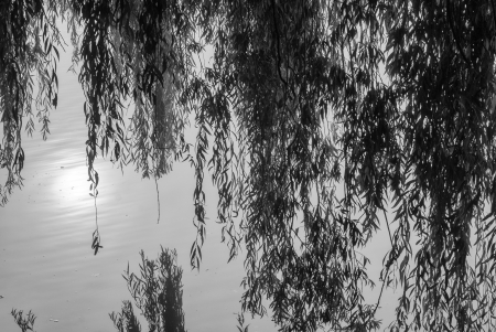 Reflections in the water with twigs and leaves photo