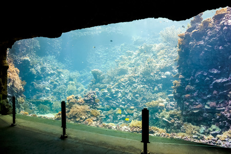 Coral Reef at Marine life aquarium photo