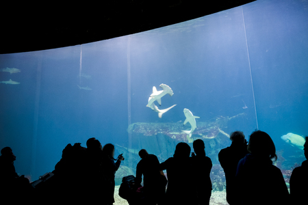 aquarium visit: silhouettes of people against a big aquarium