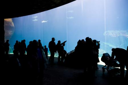 public aquarium: silhouettes of people against a big aquarium