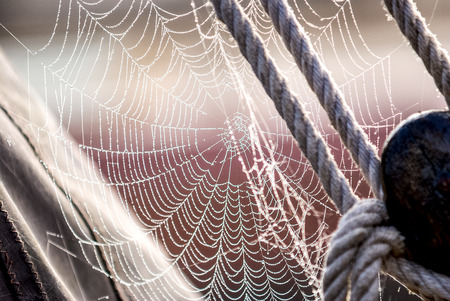 morning dew: Morning dew on Spiderweb sailboat detail Stock Photo