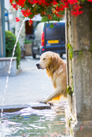 Doggy is taking a bath in an old fountain, Provence,France photo