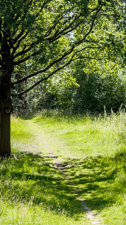 Spring green meadow with oak tree and trail photo