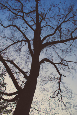 Branches of trees against the sky under the sun. photo