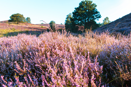 particularly: The Posbank is a particularly heathland in the Netherlands