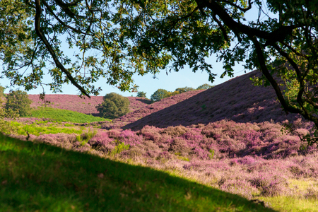 posbank: The Posbank is a particularly heathland in the Netherlands