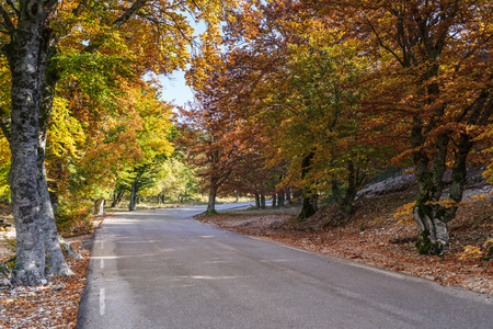 Indian Summer at the Mt Ventoux, Vaucluse, Povence, France 写真素材