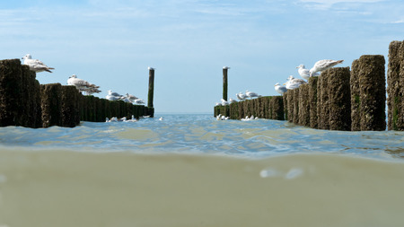 Timber groynes on the beach  at the north sea, Holland photo