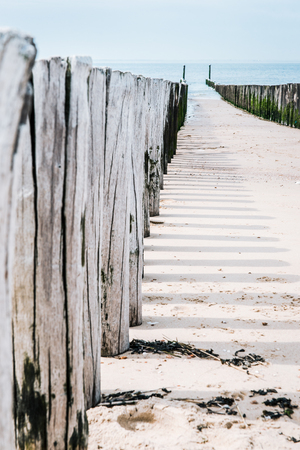 Timber groynes on the beach  at the north sea, Holland 写真素材