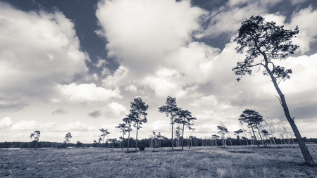 heathland: Deteriorating weather clouds over protected nature landscape in Spring Stock Photo