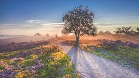 Mooie zonsopgang in een Nederlands landschap met bloeiende heide en zonnestralen die van achter een boom. Een dirthroad ook ergens heen Stockfoto