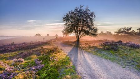 Zonnestralen die van achter boom in een Nederlandse heide