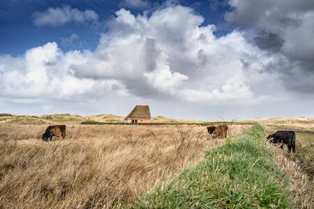 sheep barn: Traditional sheep barn at cloudy day on the island of Texel in The Netherlands