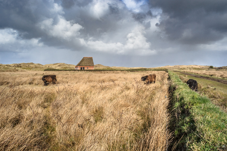 texel: Traditional sheep barn at cloudy day on the island of Texel in The Netherlands
