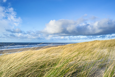 journeying: View on the beach from the sand dunes in the Netherlands