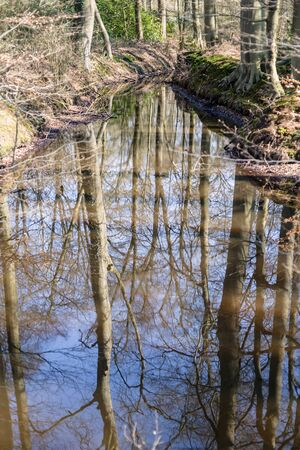 posbank: Stream with reflection of trees in the water, Holland